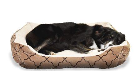 כלב קולי ישן על מיטה