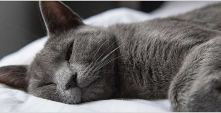 חתול נרדם על המיטה שלו