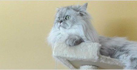 חתול יושב על מתקן גירוד