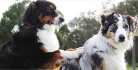 טיפול נגד פרעושים לכלב
