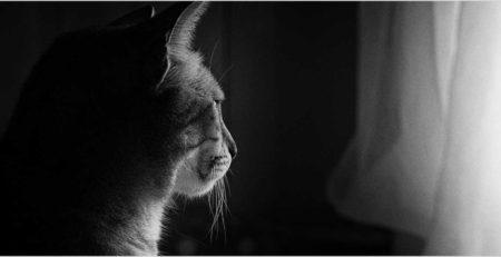 חתול מסתכל דרך החלון
