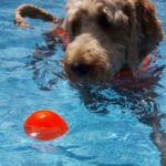 כדור משחק לכלבים תוצרת ארהב