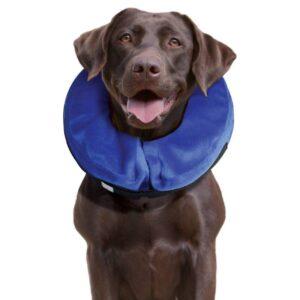 צווארון רפואי לכלב