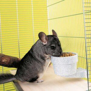 צ'ינצ'ילה אוכלת מכלי אוכל על הכלוב