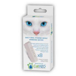 בריאות הפה לחתולים