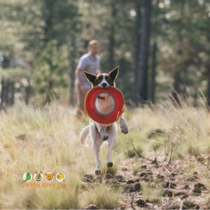 כלב מחזיק בפה צלחת פריסבי של ראפוור