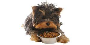 מזון הוליסטי לכלבים