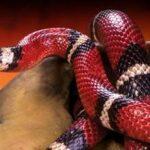 מקום מסתור לנחשים בטרריום