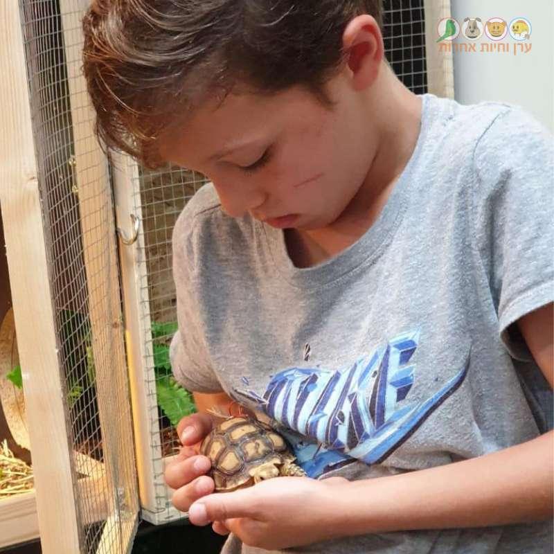 ילד מחזיק צב דרבני