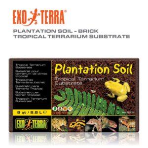 אדמה לצמחיה טבעית בטראריום