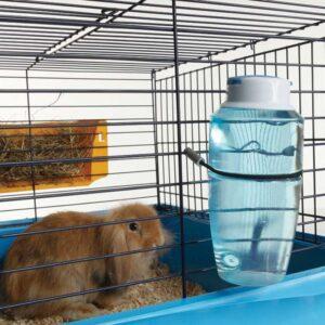 בקבוק שתיה לארנבו תלוי על הכלוב