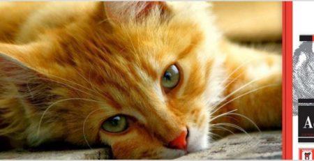 אוכל סופר פרימיום לחתולים