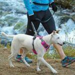 טיול עם הכלב רתמת גוף לכלב, RUFFWEAR