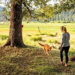 כלב קשור לכבל רץ בין 2 עצים