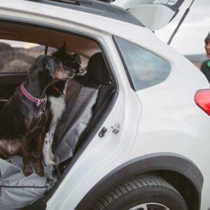 כלבים יושבים על כיסוי רכב של RUFFWEAR