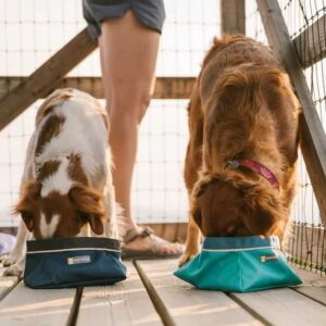 כלבים שותים מים בקערה לטיולים של ראפוור
