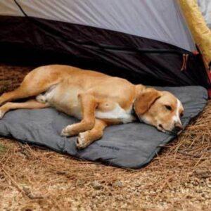 כלב ישן על מזרן שטח של ראפוור