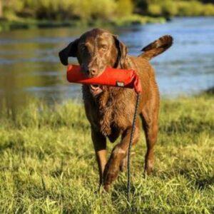 כלב משחק עם צעצוע של RUFFWARE