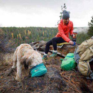 כלב אוכל מקערה בטיול שטח