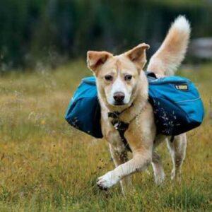 כלב עם תרמיל גב של ראפוור
