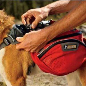 כלב סוחב תרמיל גב של חברת ראפוור