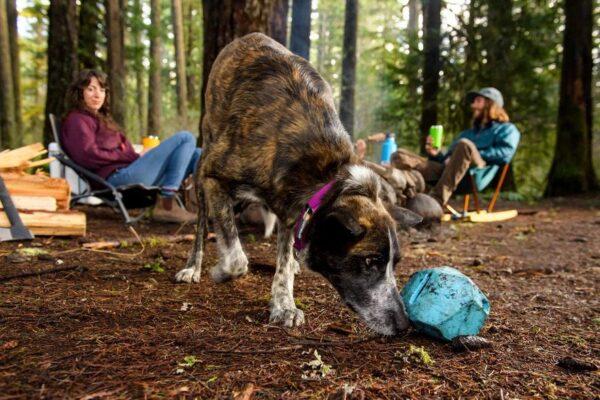 צעצוע לכלבים של ראפוור בצורת סלע