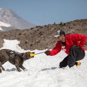 כלב משחק עם בעליו בצעצוע של ראפוור