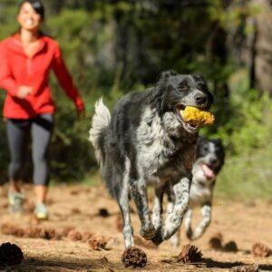 כלב רץ עם צעצוע של ראפוור בפה