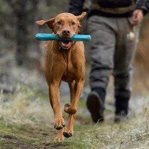 כלב רץ עם צעצוע בפה של RUFFWEAR