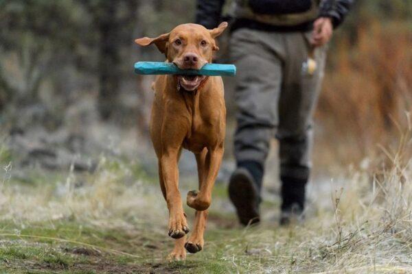 צעצוע לכלב של ראפוור GNAWT-A-STICK