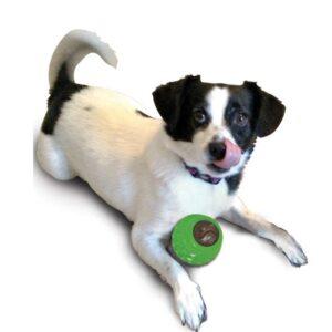 כלב משחק בצעצוע לעיסה של ETHICAL PETS