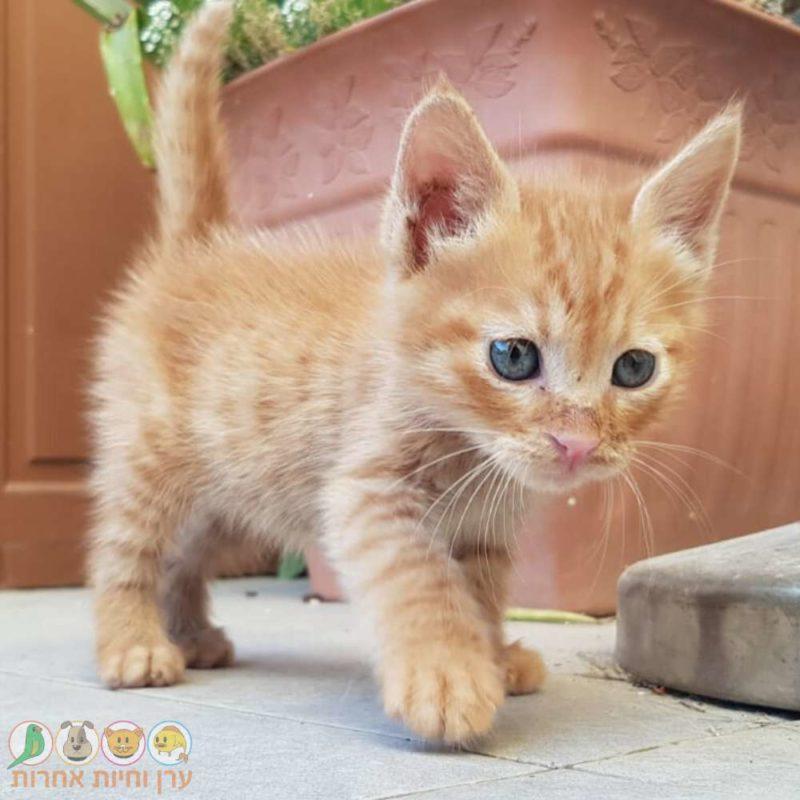 וטרינר לגורי חתולים ברחובות