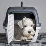 כלוב נשיאה לכלבים מגזע קטן