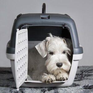 כלב יושב בתוך כלוב נשיאה