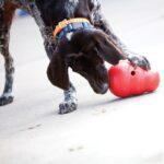 קונג וובלר צעצוע לכלבים שעות של תעסוקה