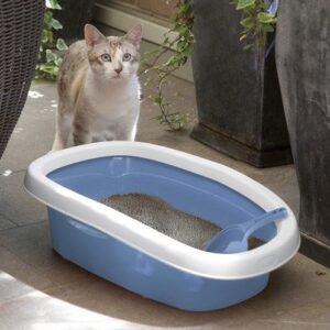 חתול עומד ליד שירותים פתוחים בצבע כחול