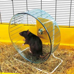 עכבר רץ על גלגל ריצה עם מעמד