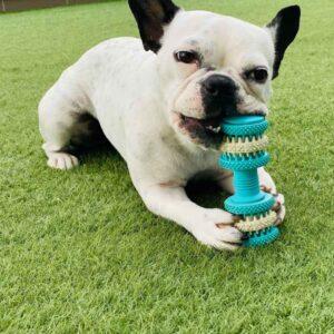 כלב נושך צעצוע דנטלי