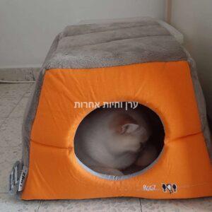 חתול ישן במיטת איגלו מתקפלת