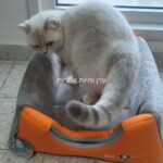איגלו מתקפל לחתול