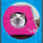 מיטה לחתול בצורת איגלו ROGZ