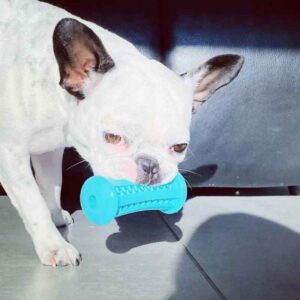 כלב מחזיק בפה צעצוע נשיכה