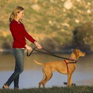 אישה מטיילת עם כלב ברתמת גוף שך HALTI