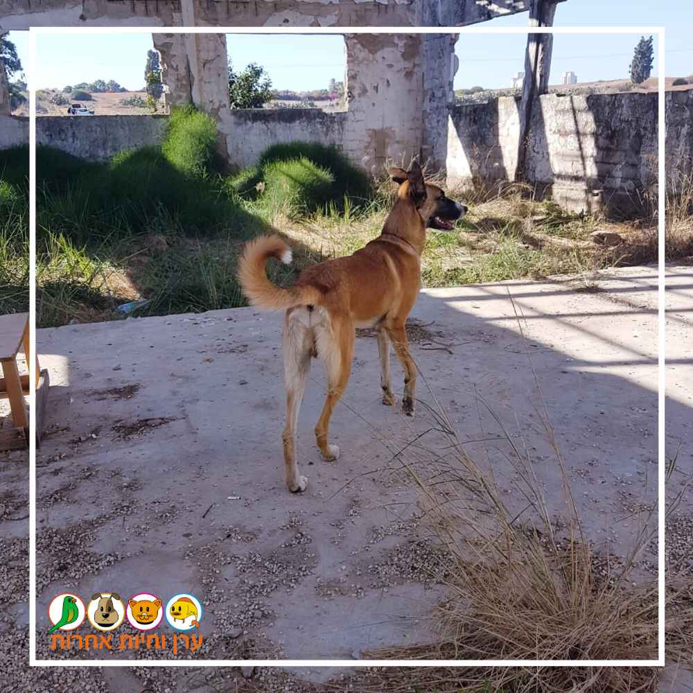 כלב בטיול יומי