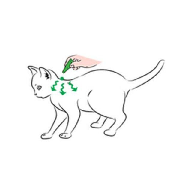 אמפולות לחתולים הוראות שימוש