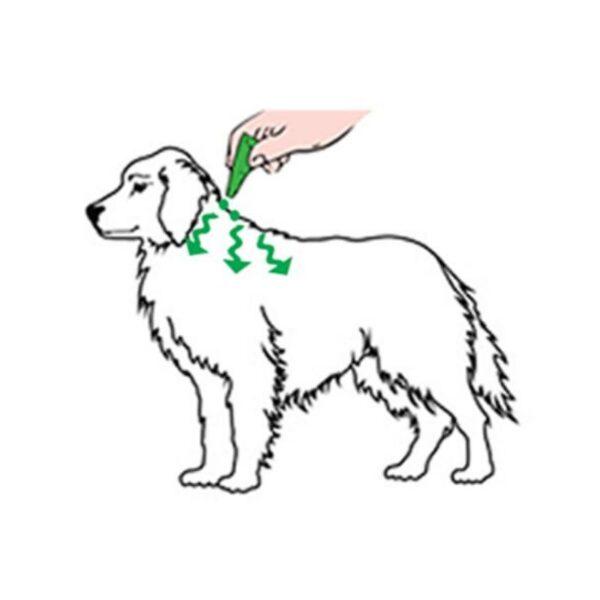 אמפולות לכלבים הוראות שימוש