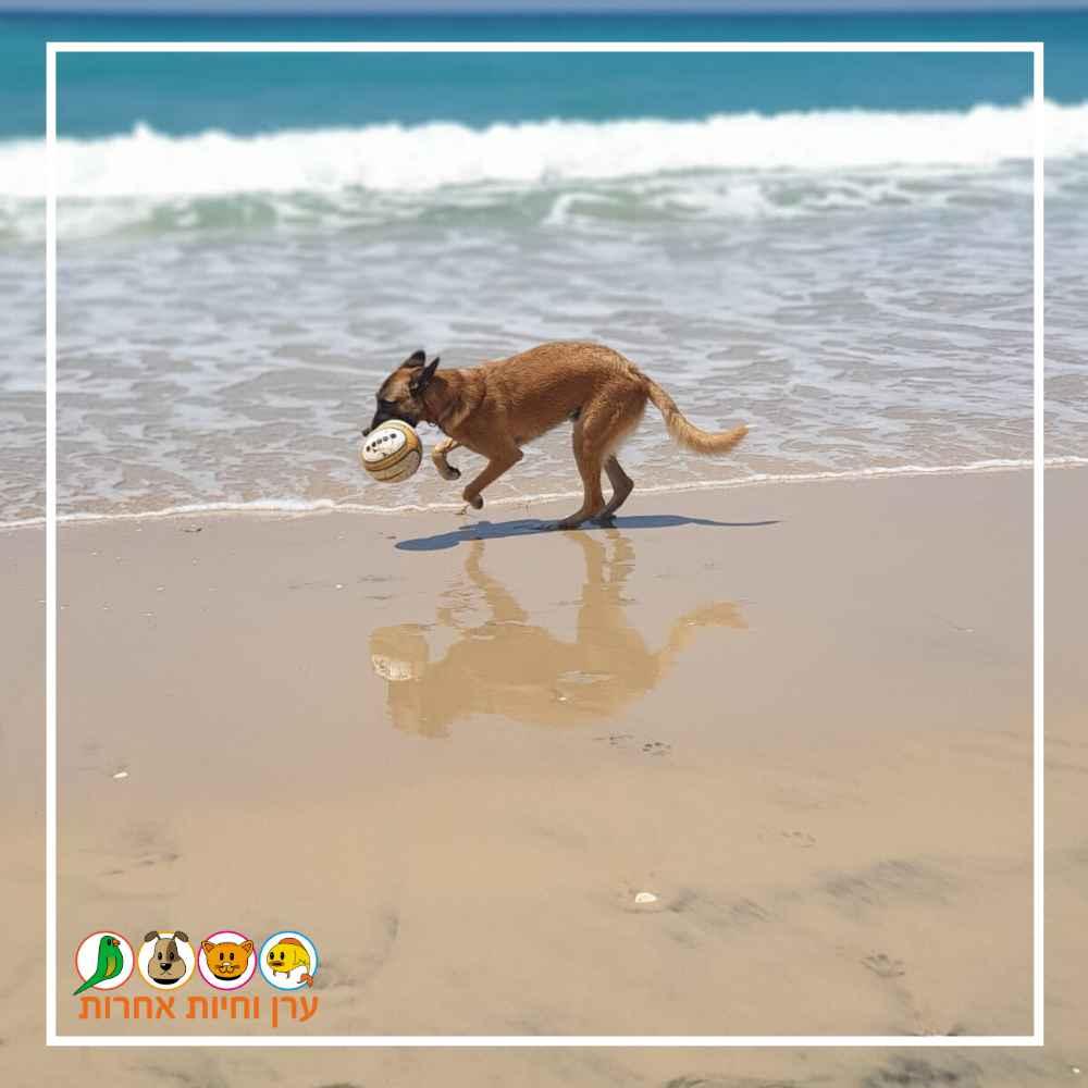 כלב משחק עם כדור בחוף הים