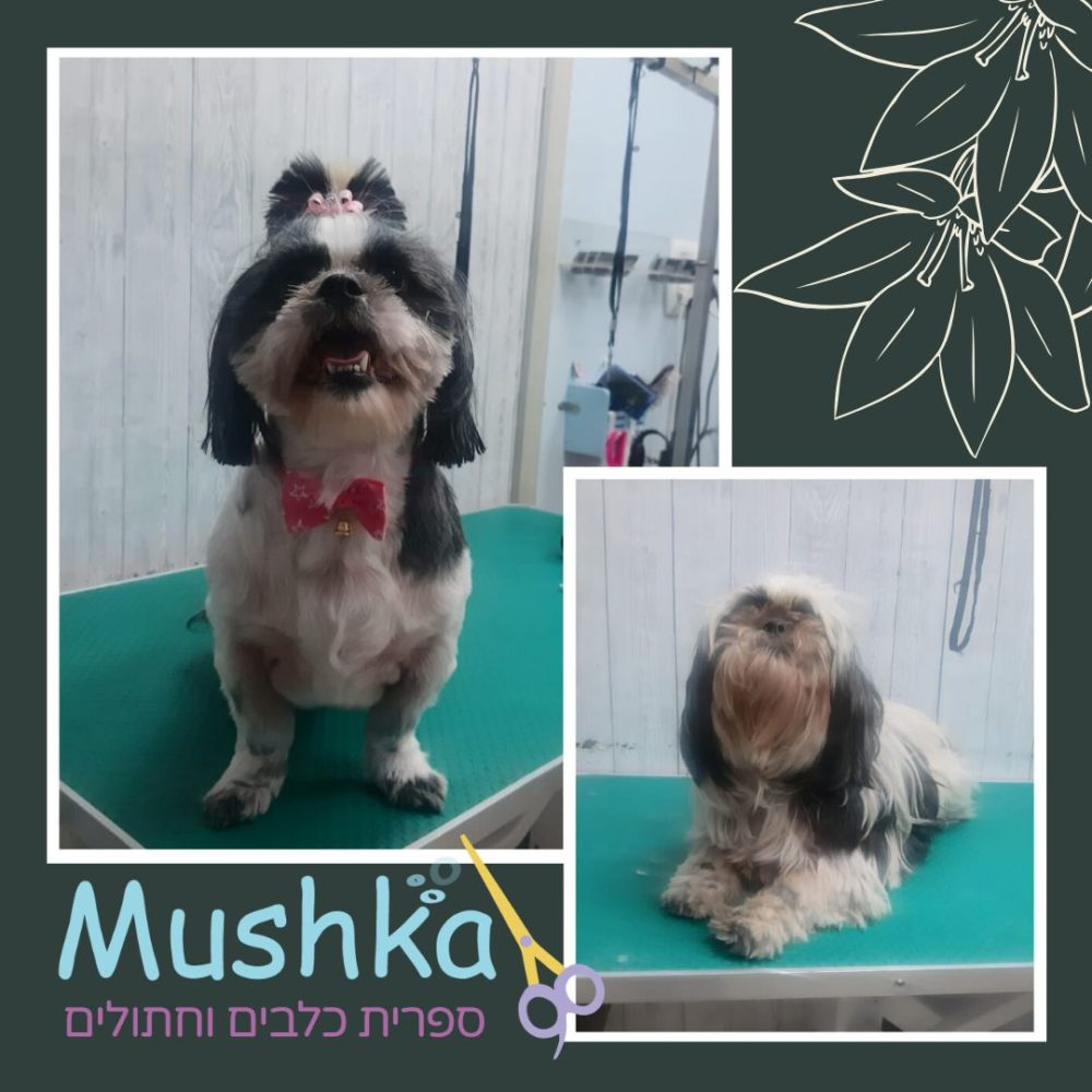 mushka dog groomer rehovot