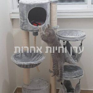 חתול מטפס על מתקן גירוד גדול