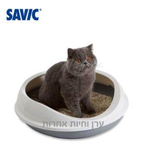 חתול בריטי יושב בארגז צרכים